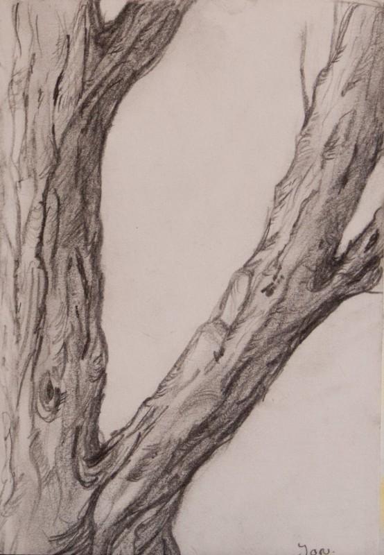 Bomen serie · Tekeningen · Marjon de Jong